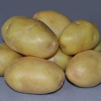 Семенной картофель Impala