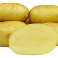 Семенной картофель Colette