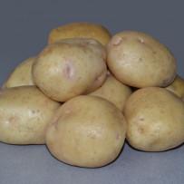 Семенной картофель Nevsky